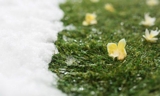 雪をかぶった草と花