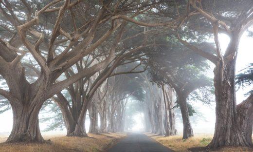霧がかった道