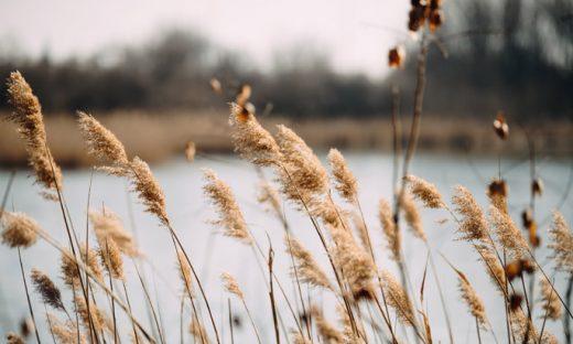 風で揺れる草